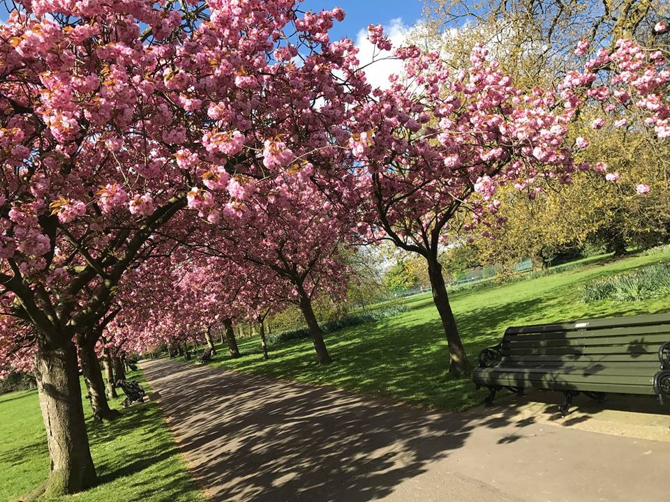 グリニッジパーク greenwichpark